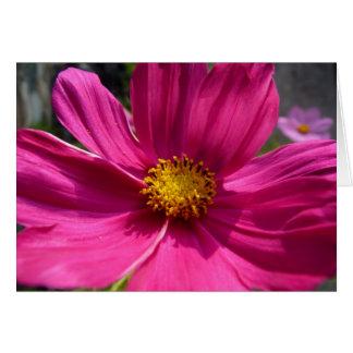 Hot Pink Cosmos Photo Card