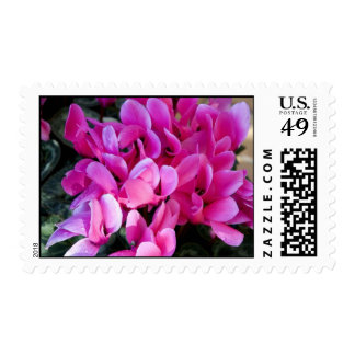 Hot Pink Cyclamen Postage