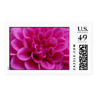 Hot Pink Dahlia Postage Stamp