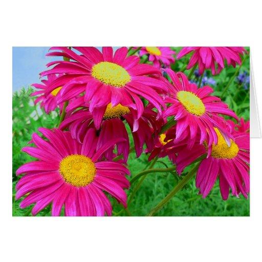 Hot Pink Daisies Greeting Card