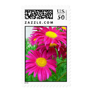 Hot Pink Daisies Postage