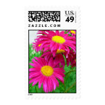 Hot Pink Daisies Postage Stamps