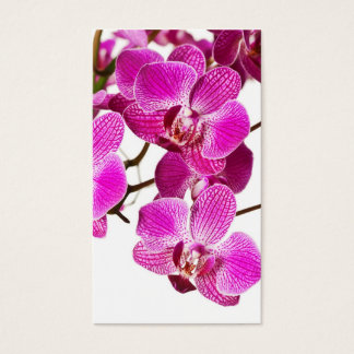 Hot Pink Dendrobium Orchid - Orchids Background Business Card