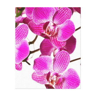 Hot Pink Dendrobium Orchid - Orchids Background Canvas Print