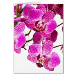 Hot Pink Dendrobium Orchid - Orchids Background Cards