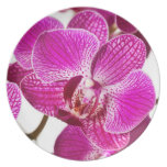 Hot Pink Dendrobium Orchid - Orchids Background Melamine Plate