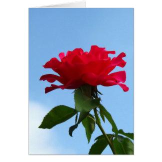 Hot Pink Flower Card