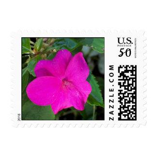 Hot Pink Flower Stamp