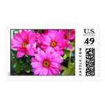 Hot Pink Flowers Postage Stamps