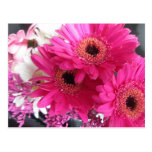 Hot Pink Flowers Postcard