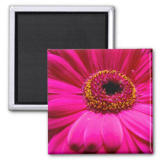 hot pink gerber daisy fridge magnet