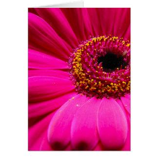 hot pink gerber daisy greeting cards