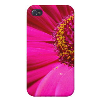 hot pink gerber daisy iPhone 4/4S cases