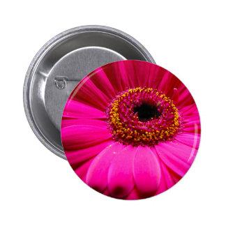 hot pink gerber daisy pinback button