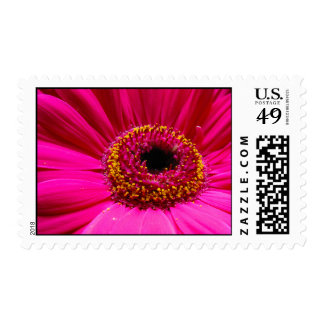 Hot pink gerber daisy postage stamps