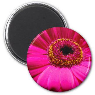 hot pink gerber daisy refrigerator magnet