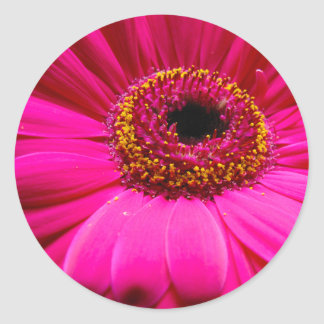 hot pink gerber daisy round stickers