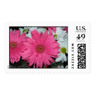 Hot Pink Gerber Daisy Stamp