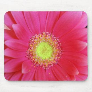 Hot Pink Gerbera Daisy Mousepad