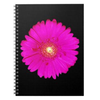 Hot Pink Gerbera Daisy Spiral Notebooks