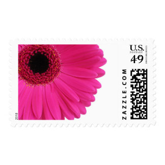 Hot Pink Gerbera Daisy Postage Stamp