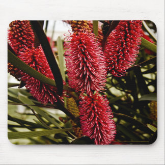 Hot Pink Grevillea Mouse Pad