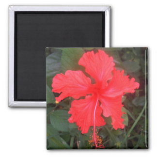 Hot Pink Hibiscus Magnet