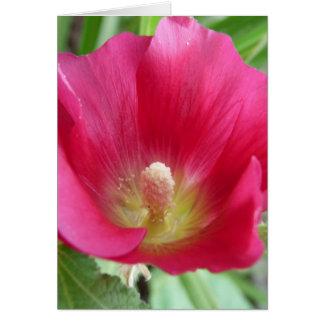 Hot Pink Hollyhock Photo Card