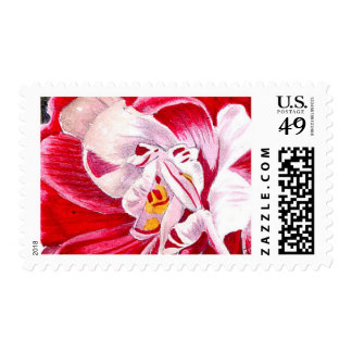Hot Pink Hothouse Orchids Wild Flowers Drama Postage Stamps