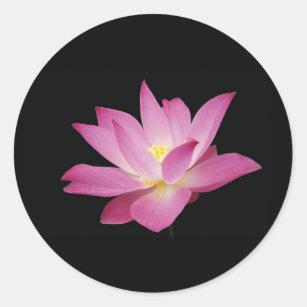 Pink lotus flower love gifts on zazzle hot pink lotus flower on black background sticker mightylinksfo