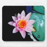 Hot Pink & orange lotus water lily flower Mousepads