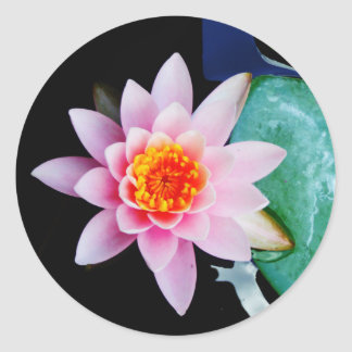 Hot Pink orange lotus water lily flower Round Stickers