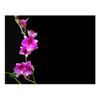 hot pink orchids postcard