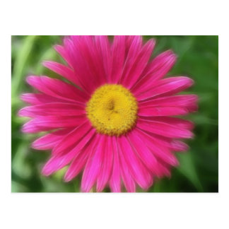 Hot Pink Painted Daisy Postcard