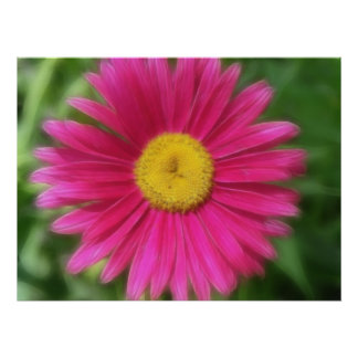 Hot Pink Painted Daisy Posters