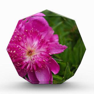 Hot Pink Peony Acrylic Award