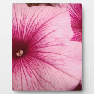 Hot Pink Petunias Plaque