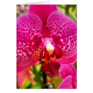 Hot Pink Phalenopsis Orchid Blank Greeting Card