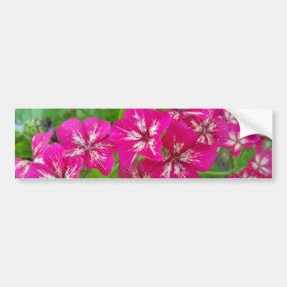 Hot Pink Phlox Bumper Sticker