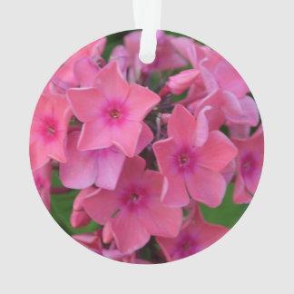 Hot Pink Phlox Flowers