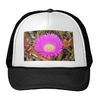 Hot pink Pigface flower in bloom 2 Trucker Hat