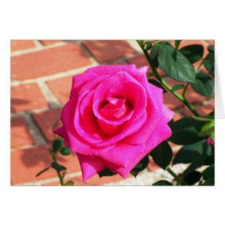 Hot Pink Rose Card