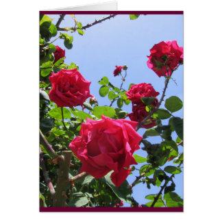 Hot pink Roses Card