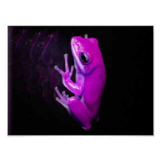 Hot Pink Tree Frog Poster