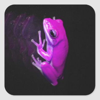 Hot Pink Tree Frog Square Sticker
