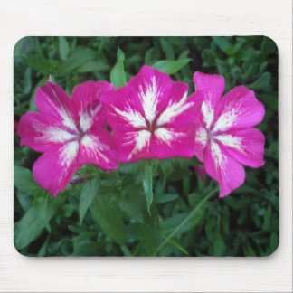 Hot Pink Trio of Phlox Mouse Pad