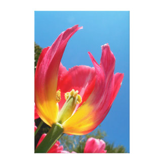 Hot Pink Tulip Inner Beauty Canvas Print