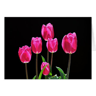 Hot Pink Tulips Cards
