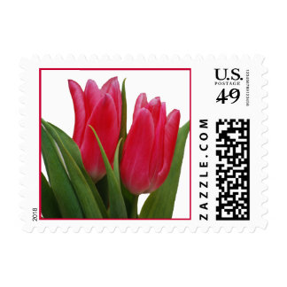 Hot Pink Tulips Postage