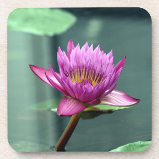 Hot Pink Water Lily Beverage Coaster